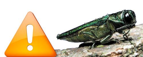 Emerald Ash Borer Alert